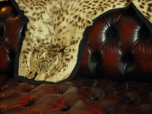 Kolonaki Antiques Interior Antwerp - leather couch